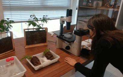 CBMA celebrates World Soil Day
