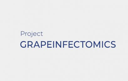 GRAPEINFECTOMICS – Transcriptome and metabolome reprogramming in Vitis vinifera cv. Aragonês and Vitis rupestris berries upon infection with Erysiphe necator
